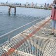 海釣り初体験
